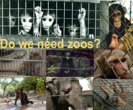 Should there be any zoos in the world?