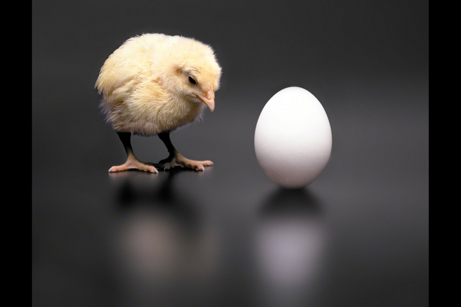 Which Came First: The Chicken or the Egg?